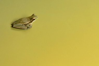 Close up view of Frog at La Pampa, Argentina