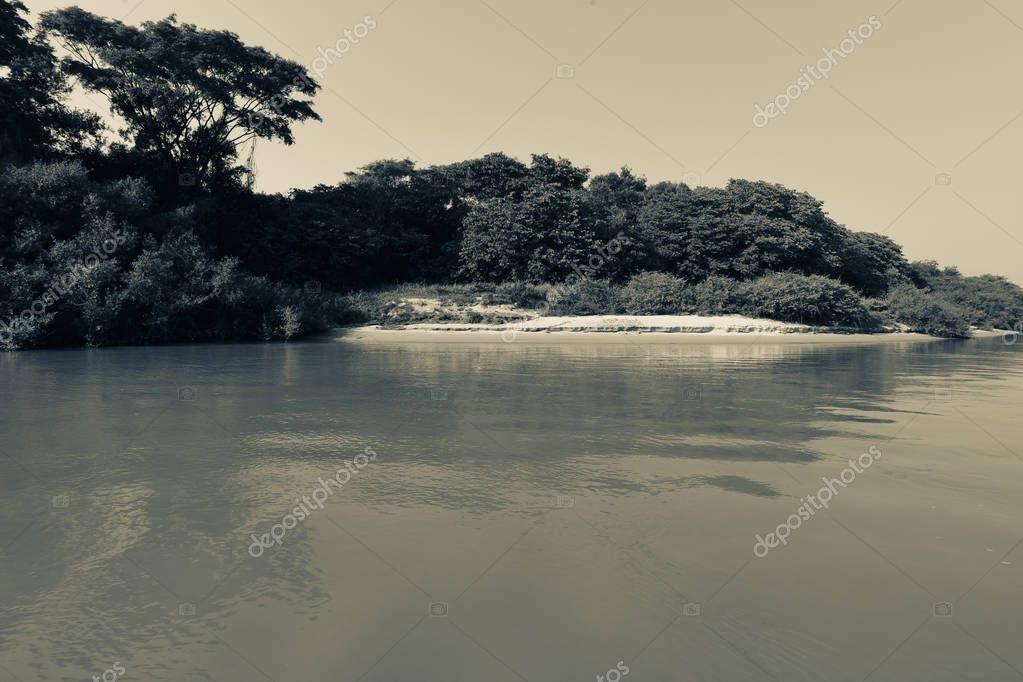 Pantanal forest ecosystem, Mato Grosso, Brazil
