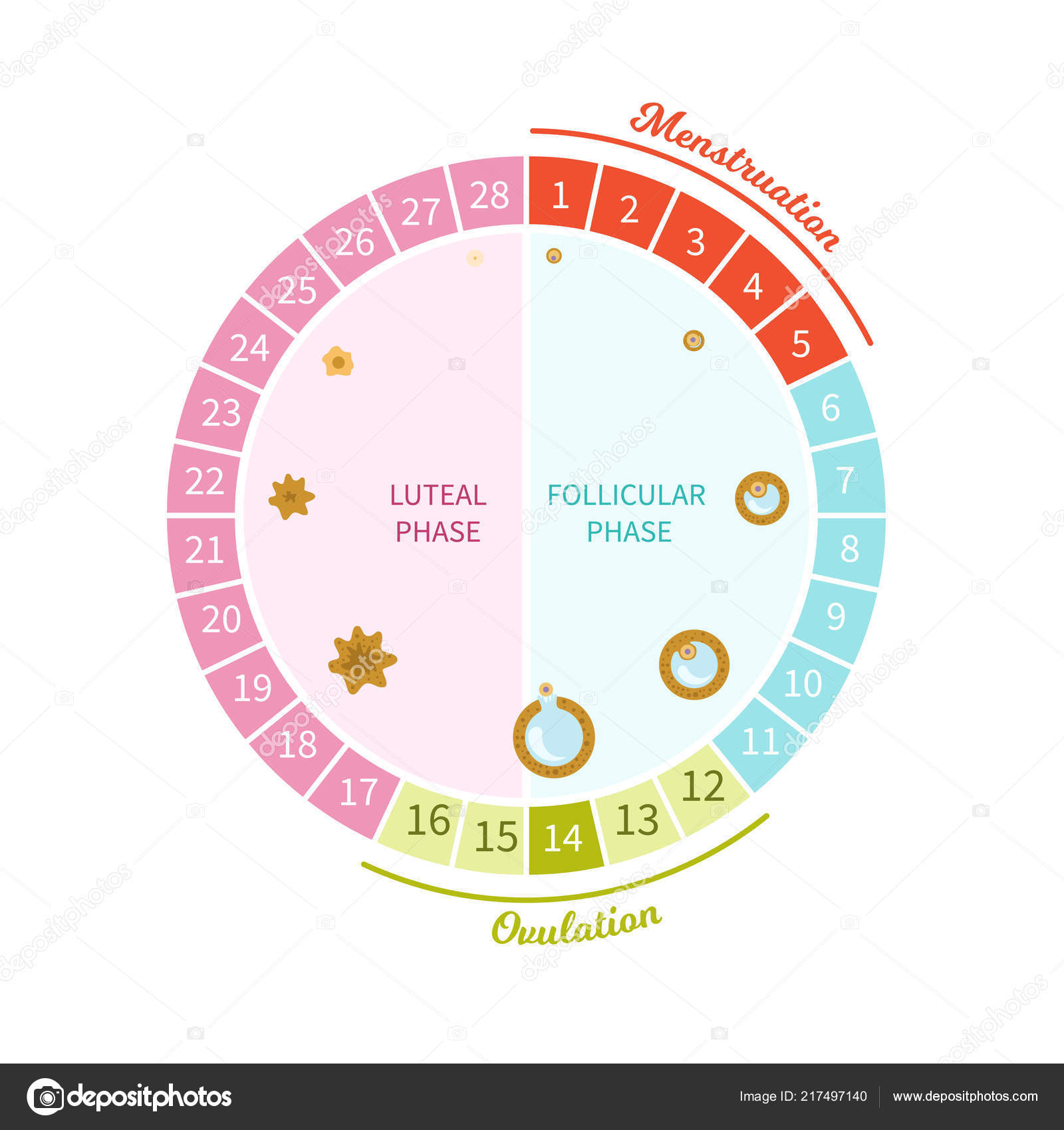 cycle menstruel f minin sch ma maturation image. Black Bedroom Furniture Sets. Home Design Ideas