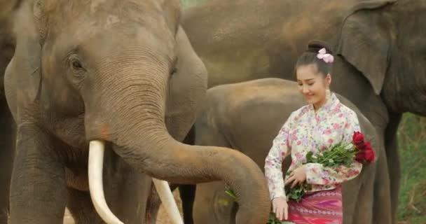 Érzékenység vonzó fiatal ázsiai nő, hagyományos ruha, az elefánt.