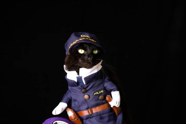 A black cat dressed as a police officer against a black background