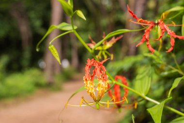 Beautiful flowers growing in Goa, India with bokeh