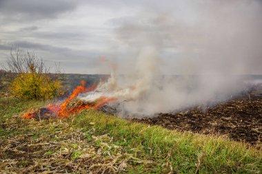 Yanan yapraklar, Bahçe temizlik sırasında yangın. Sonbahar işleri çiftlikte. Hacimli duman.