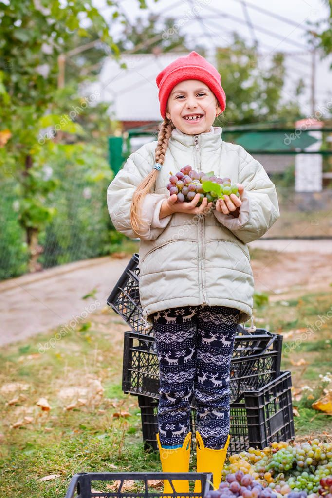 Brother and sister with grapes in their hands in the garden. Autumn harvest on the farm, children tear grapes and put in a box.