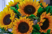 Festive bouquet of sunflowers on the window. Happy birthday to you. Most beautiful flowers of the world.