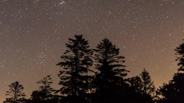 Hvězdy v noční obloze nad jehličnatých stromů silueta časová prodleva