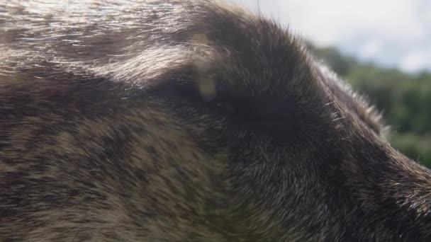 Ritratto di cane - Chiuda in su del occhi lampeggianti
