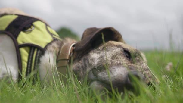 Ritratto di cane che si trova nellerba alta nel parco / prato