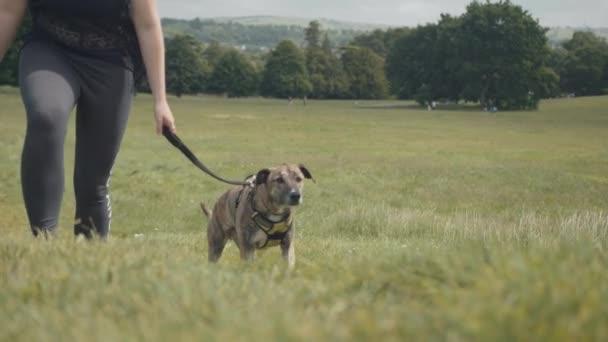 Cammina il cane nel parco / verde prato - Slow Motion
