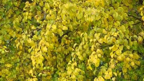 Gyönyörű őszi fák, almafa
