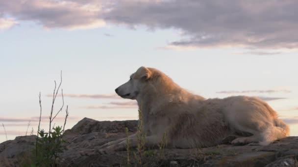 Kutya a naplemente háttér
