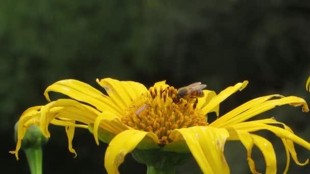 zpětně zahradní hmyz květ