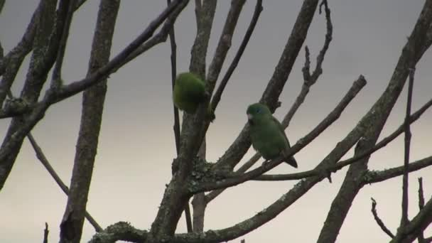 ptáci papoušci papoušky exotických ptáků