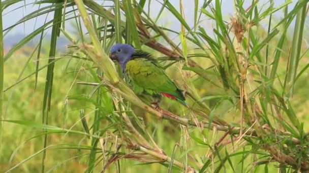 faunu ave papoušek zelený exotických ptáků