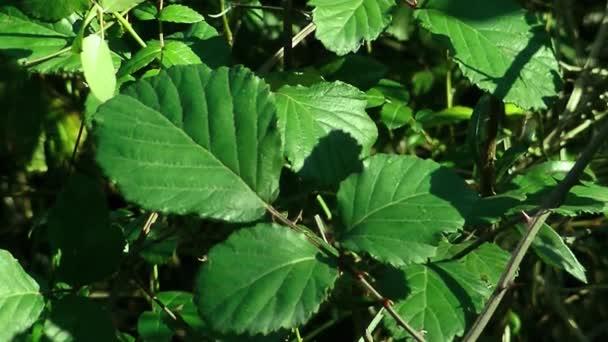 zelení listy zelených rostlin půdy