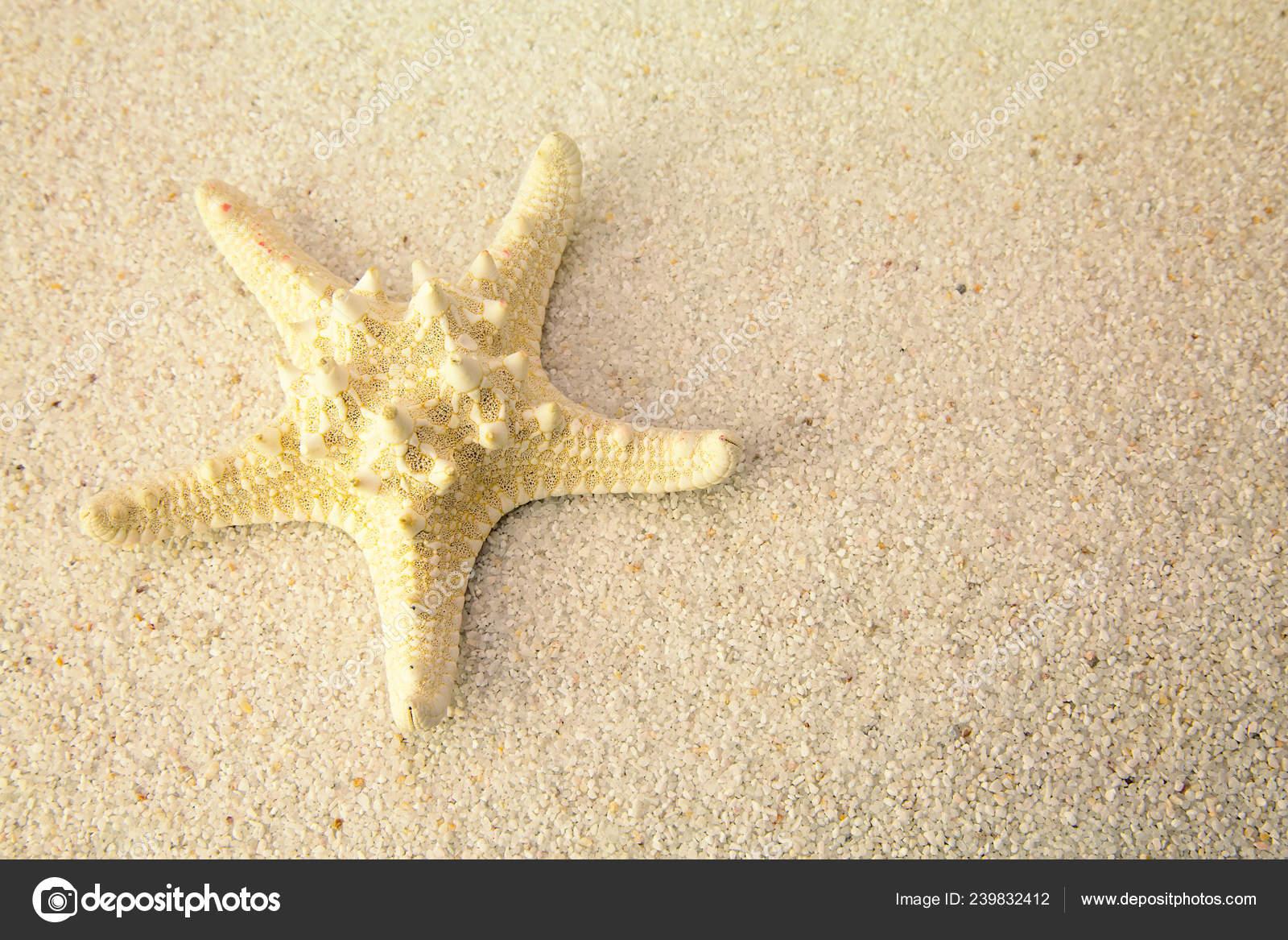 4a40c15093 Starfish Beach Sand Close Studio Shoot — Stock Photo © Pixinooo ...