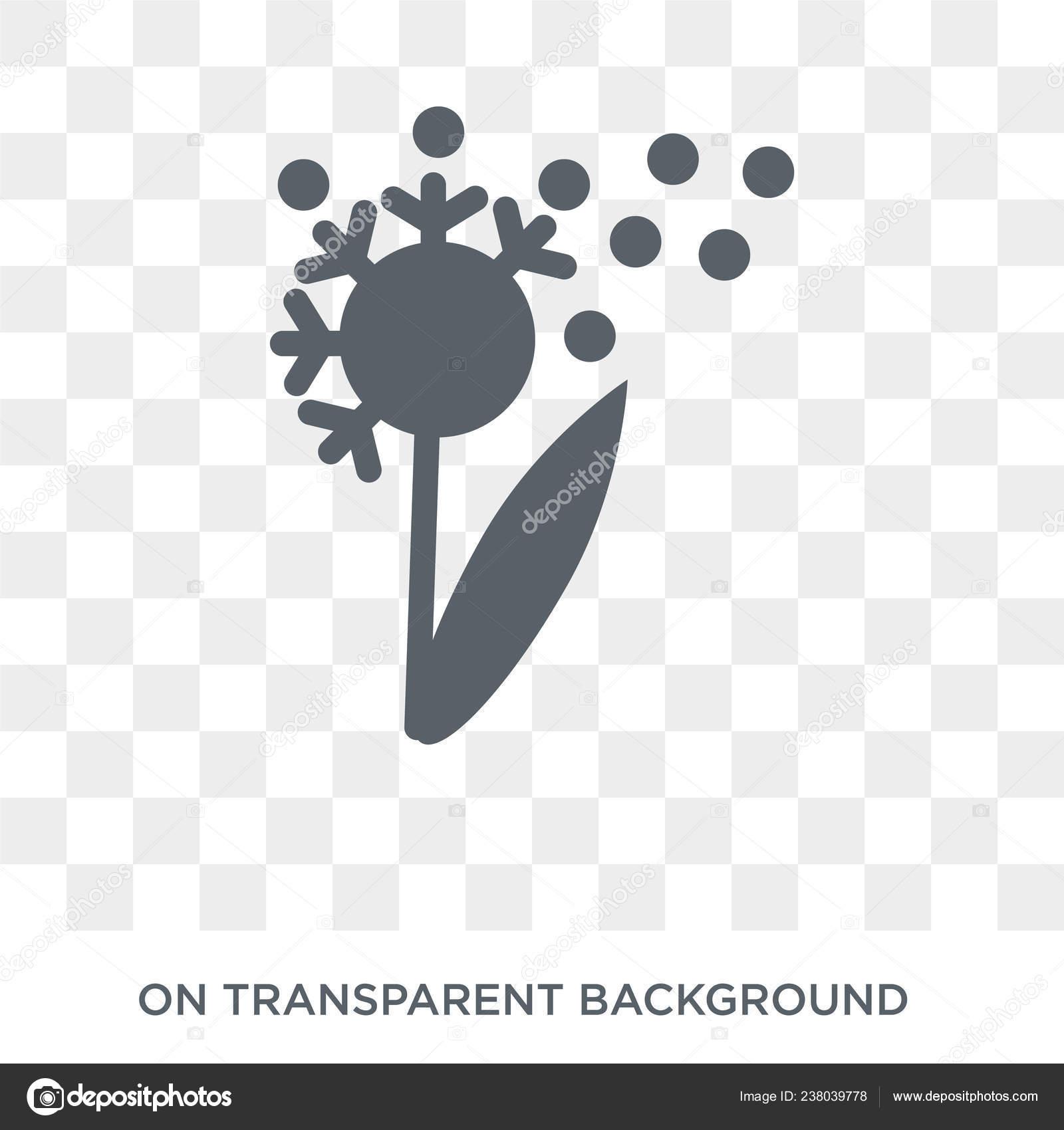 Dandelion Icon Trendy Flat Vector Dandelion Icon Transparent