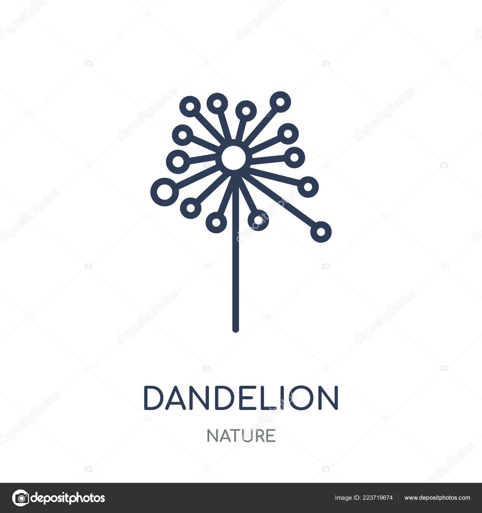 Dandelion Icon Dandelion Linear Symbol Design Nature Collection