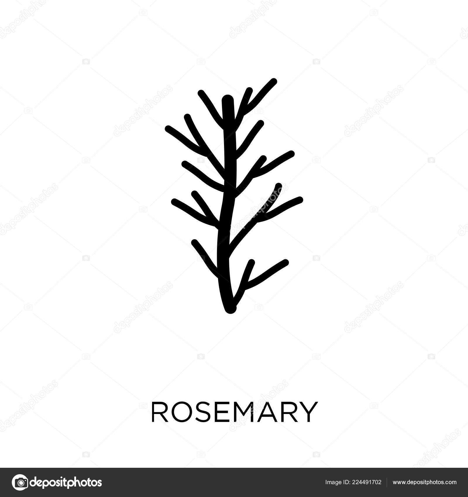 Rosemary Icon Rosemary Symbol Design Nature Collection Simple