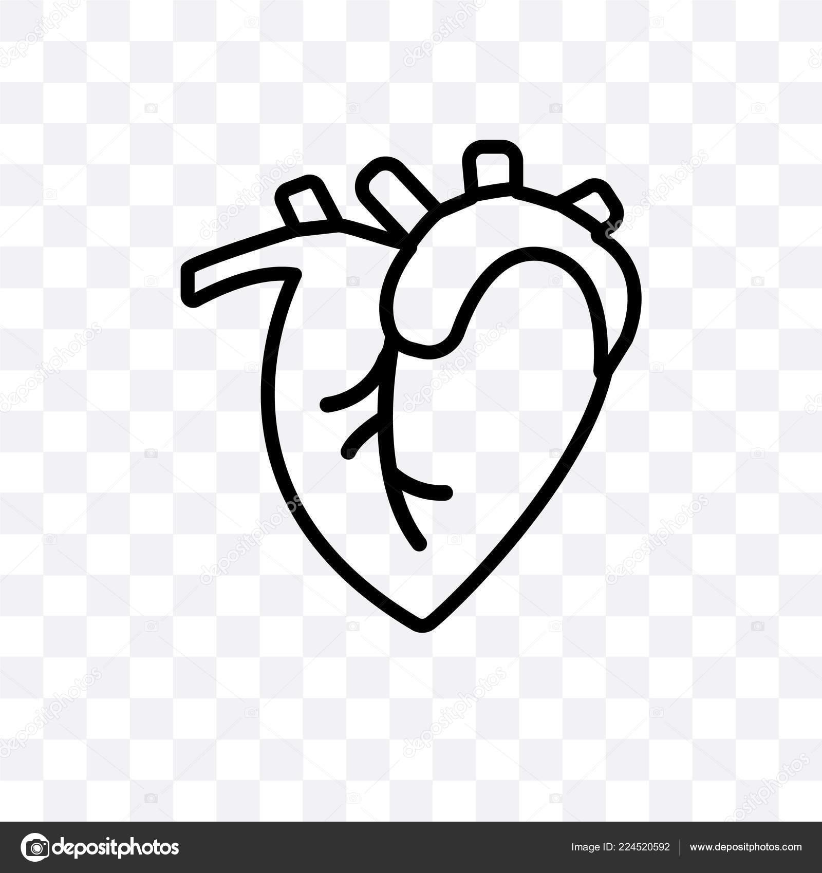 Background: human heart transparent | Human Heart Vector