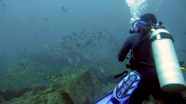 Practicing scuba diving in the waters of the Caribbean Sea underwater.Underwater ocean aquatic wildlife watching.Diving in the waters of the Caribbean Sea.Observing marine life in the coral reef.