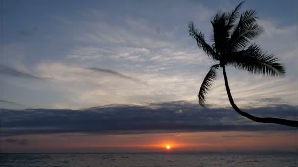 Szűz érintetlen karibi tengerparton naplementekor egy pálmafa. Golden világos fény felett homokos strandok alkotják a félelmetes trópusi tájat. Látványos félelmetes színes háttér hajnalban eltelt a nap az éjszakai égbolton.
