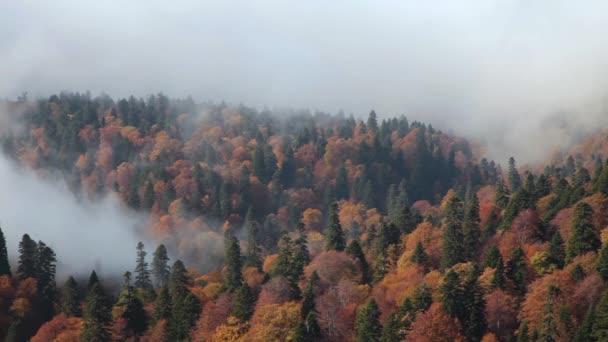 Reggel őszi erdő a ködben. Ködös tűlevelű erdő