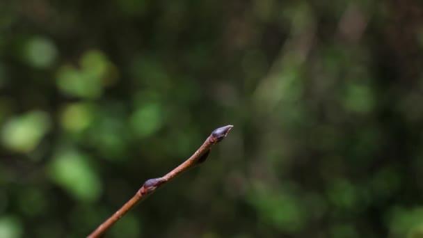 Szitakötő makró közelről
