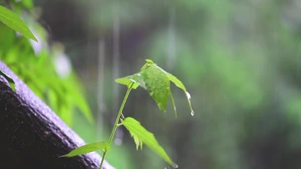 Stromy života koncept malý strom vyrůstající z velkého stromu. V prší a sluníčko. Krásná příroda zblízka.