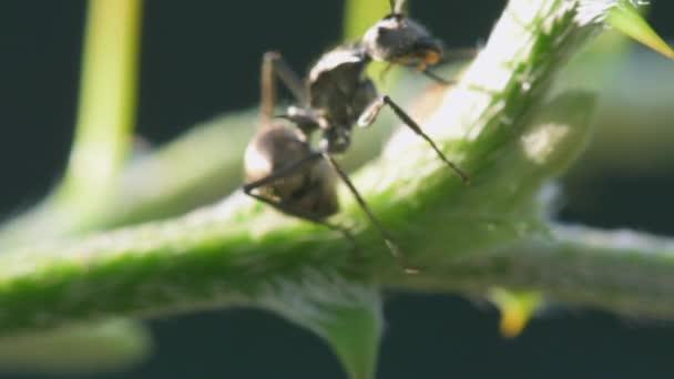 Portrét makro velký mravenec na zelený strom na slunci s přírodou pozadím