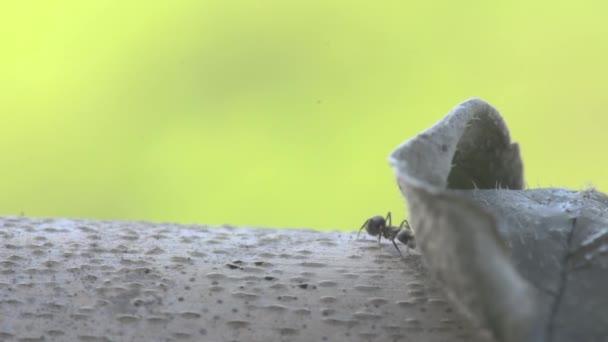 Portrét makro velký mravenec na suchý strom na slunci s pozadím zelené přírody