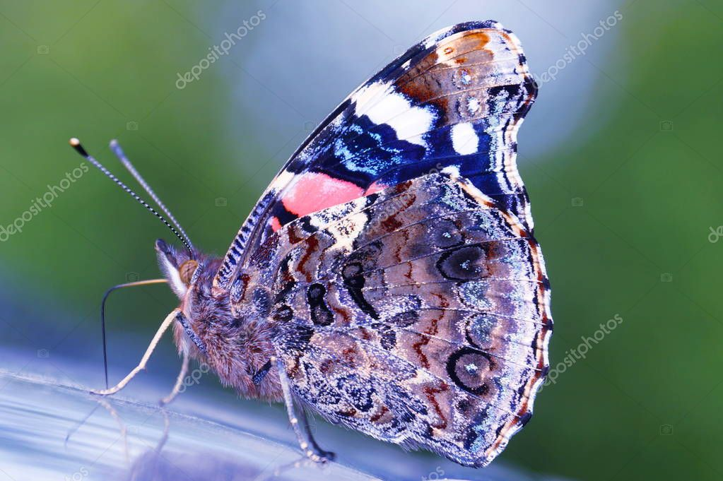 In the photo, a beautiful butterfly with a very well-visible pattern of the lower side of the wings. The color is very mottled with a variety of red, blue, brown winding lines. Visible legs, antennae, eyes of a butterfly. Green background.