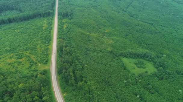 Road in forest from top view. Zoom out aerial landscape from drone. 4K,.