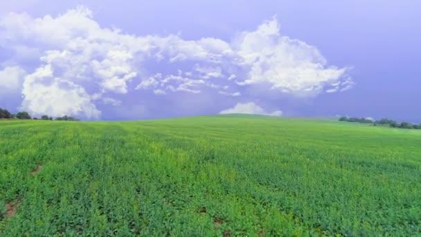 Luftaufnahme des lebhaften grünen Feldes. Lavendelhimmel mit flauschig weißen Wolken. Kopierraum. 4k.