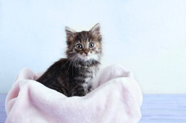 A small gray kitten sits on a pink plaid against a white wall.