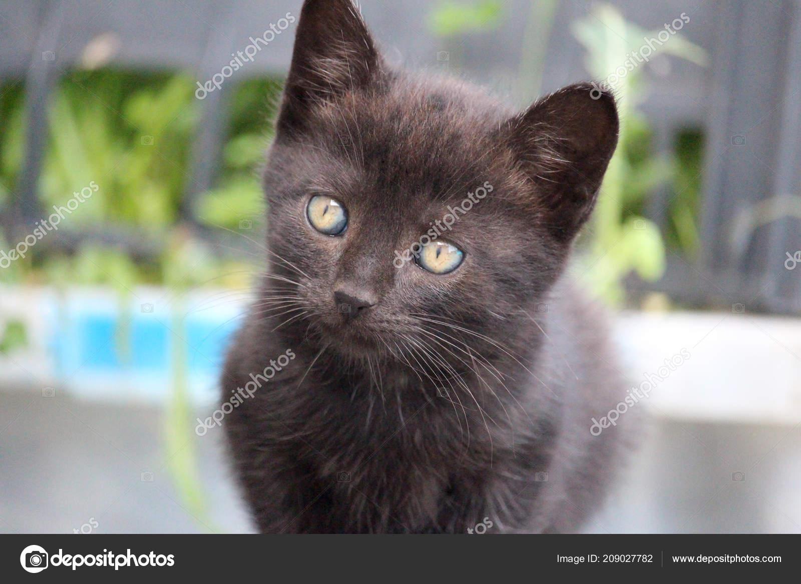 Sladké mladé černé kočička fotky