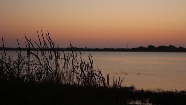 Vysoké trávy lehce houpat ve větru v západ slunce, s řekou jako pozadí. Malá hloubka ostrosti