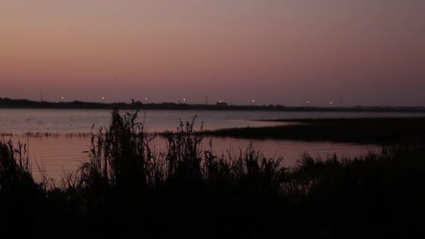 Vysoké trávy a říční vegetace lehce houpat ve větru v pozdě večer. Řeka jako pozadí, malá hloubka ostrosti