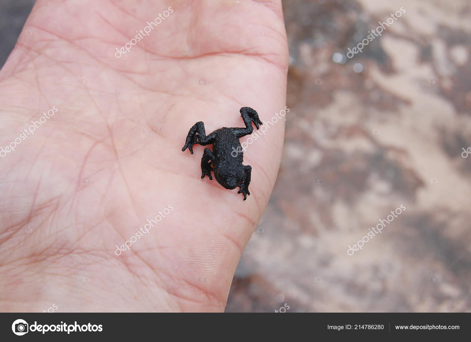 ξηρό μαύρο μουνί μπικίνι πίπα φωτογραφίες