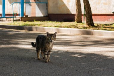 a homeless cat is walking down the street