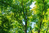 Fotografie Krásný tropický Zelený strom a listí v lese s sun light