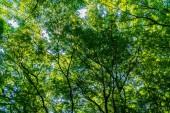 Krásný tropický Zelený strom a listí v lese s sun light