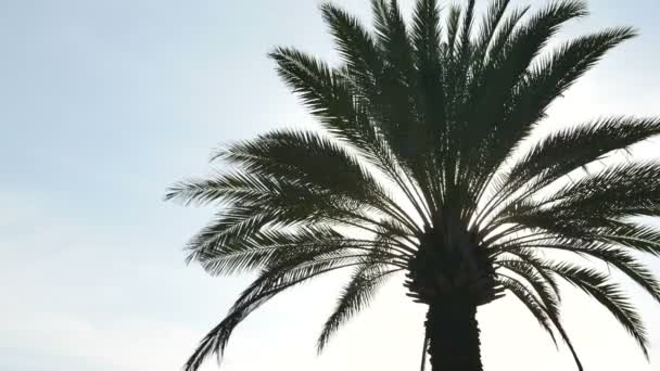 bottom view footage of palm tree in front of sky