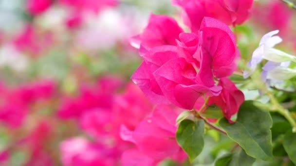 Vyhlídkové těsné záběry krásných květin