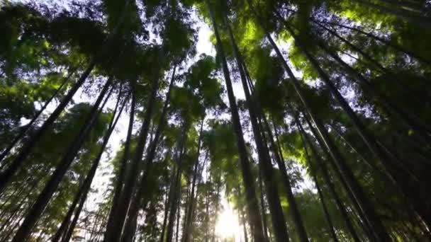 scénický spodní pohled záběry krásné zelené stromy