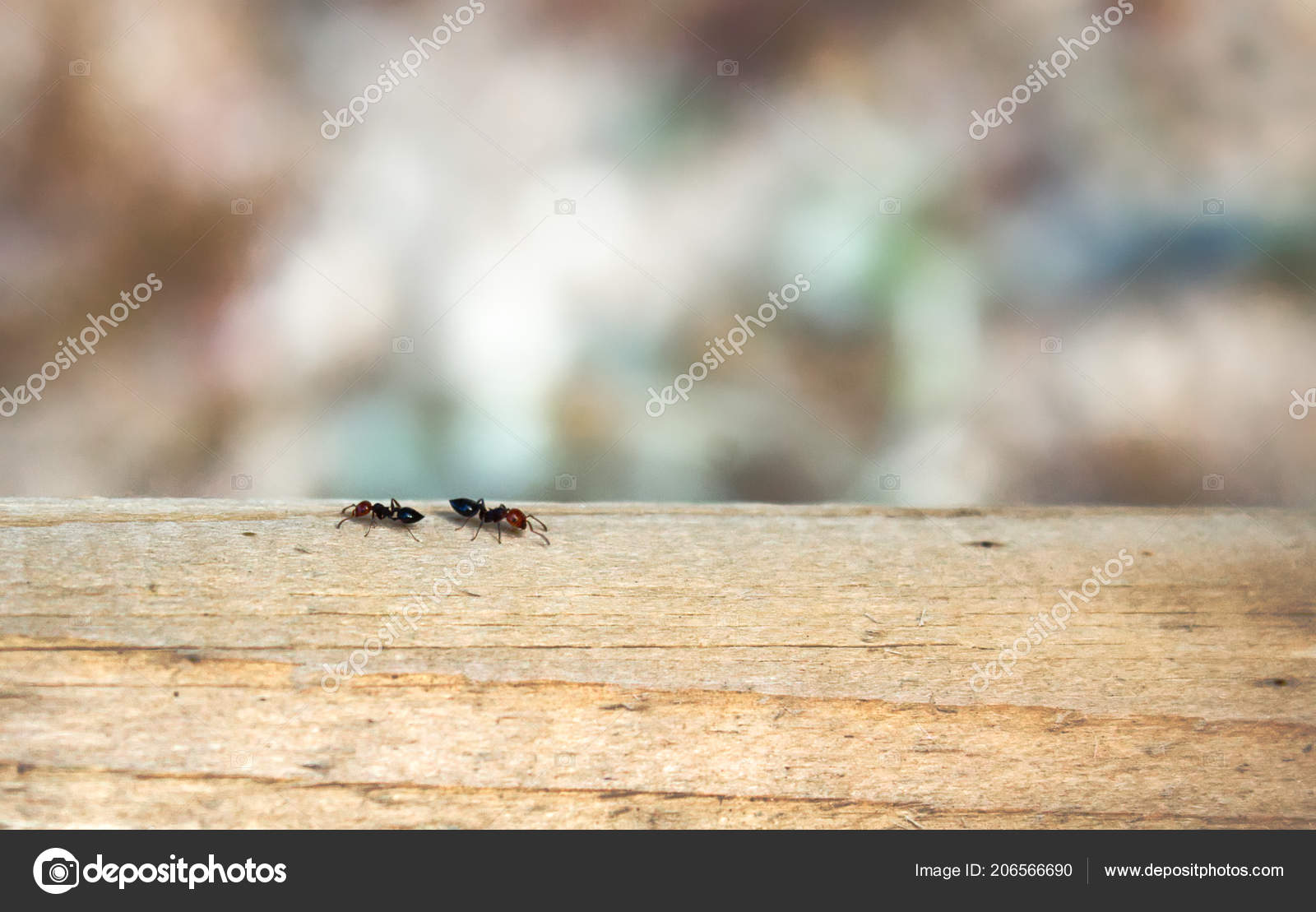 Duas Formigas Trabalhador Através Feixe Madeira Com Fundo
