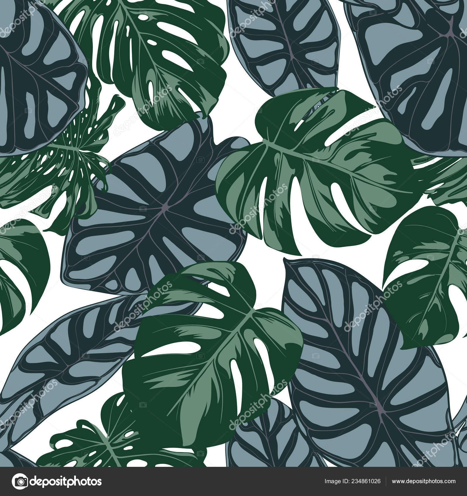 Vector patrón transparente trópico. Filodendro y hojas de Alocasia ...