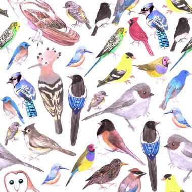 Birds of America- pets and wild birds seamless background