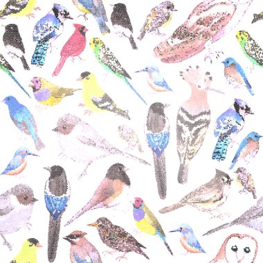 Birds of America- pets and wild birds seamless mosaic background