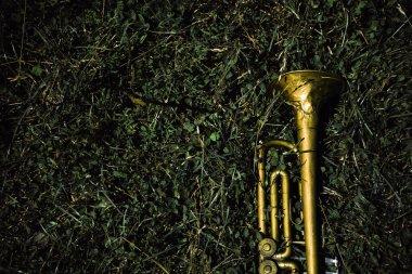 old trumpet, trumpet on grass, trumpet on the ground,